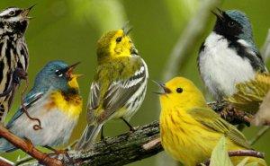 Natuurwandeling Luisteren naar vogelzang in en rond het gehucht Ruy