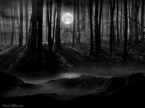 Nachtelijke boswandeling
